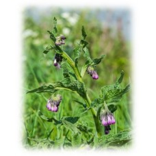 Comfrey Oil Herbal Oil
