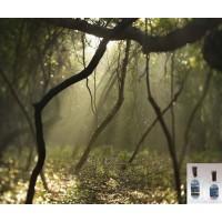 Spring Equinox Fragrance