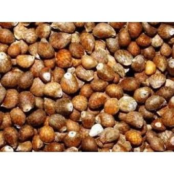 Perilla Seed Oil