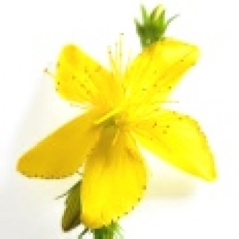St. John's Wort Herbal Oil