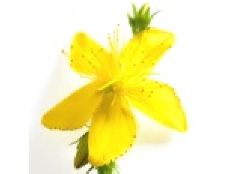 St. John's Wort Herbal Oil